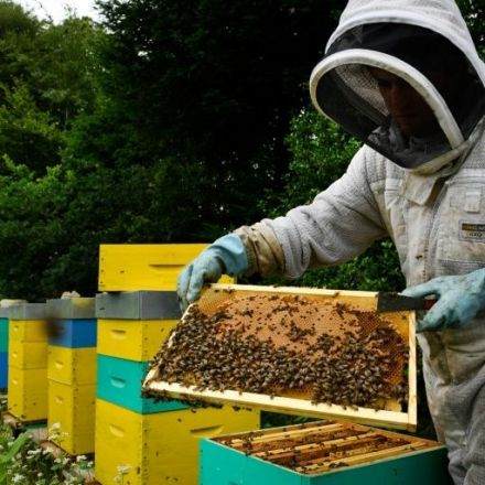 France's ban on bee-killing pesticides begins Saturday