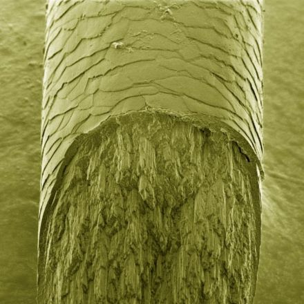 Scientists Discover New Structural Features of Human Hair