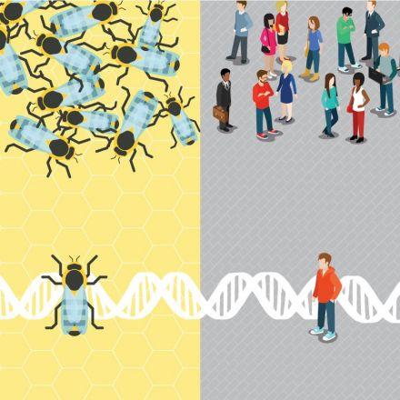 Study finds parallels between unresponsive honey bees, autism in humans