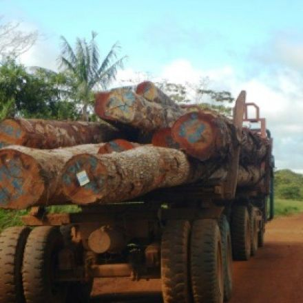 US firms buying timber from illegal PNG logging: NGO
