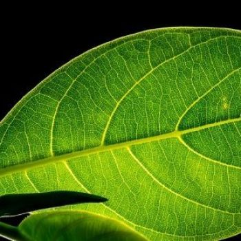 Bill Gates: Artificial Photosynthesis Can Produce Clean Fuel for the Cars of Tomorrow