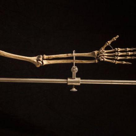 Neanderthals Hand Structures