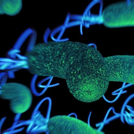 Did Microbes Shape the Human Life Span?