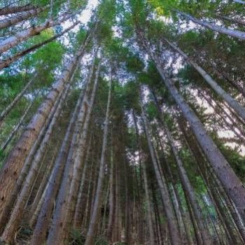 Boost for plan to plant one billion trees