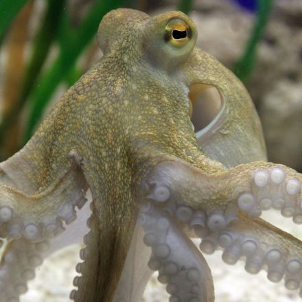 Octopus research shows that consciousness isn't what makes humans special