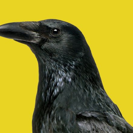Scientists Are Totally Rethinking Animal Cognition