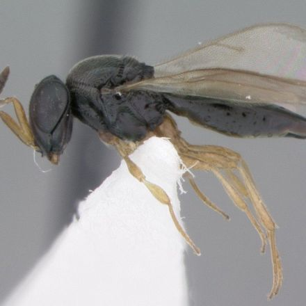 Gruesome Wasp Named After Shape-Shifting 'Star Trek' Character