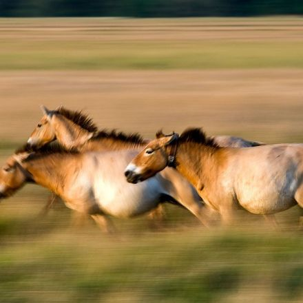 Ancient DNA upends the horse family tree
