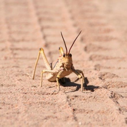 Is Noise Pollution Making Desert Bugs Disappear?