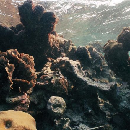 Half of Hawaii's coral reefs were damaged in one year, and the worst is yet to come