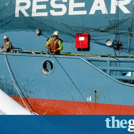 Whaling watchdog shrinks loophole allowing Japan's 'scientific' hunts