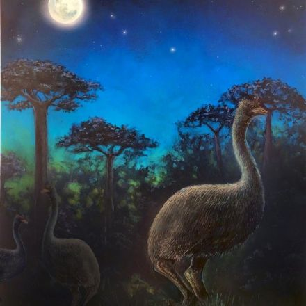 Elephant Birds, Biggest Ever, Were Creatures Of The Night