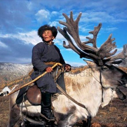 Himalayan herders reaction