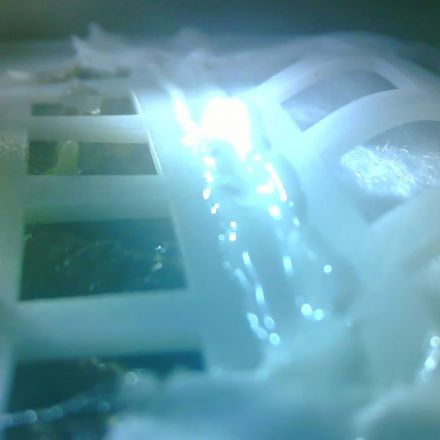 Seeds Have Sprouted on the Moon for the First Time