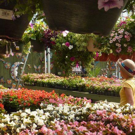 This common herb will keep bee pollinators buzzing in your garden
