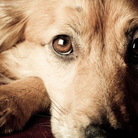 Your Dog Really Wants to Help When You're Upset