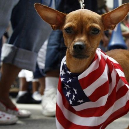 The Original American Dogs Are Gone