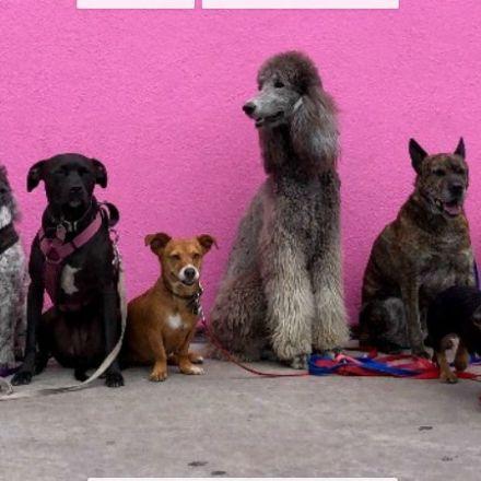 Do Bigger Brains Equal Smarter Dogs?