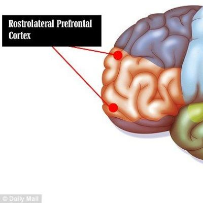 Neural Taskmaster: How the Rostrolateral Prefrontal Cortex Keeps Us ...