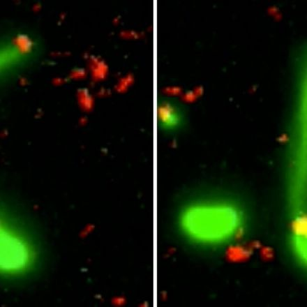 Using Harpoon-Like Appendages, Bacteria 'Fish' for New DNA