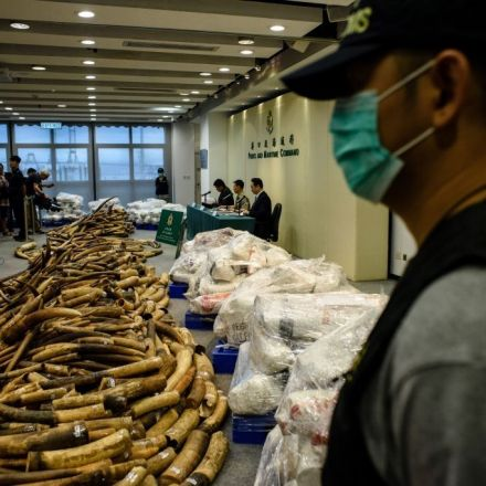 A shipment of ivory worth $9 million has been seized in Hong Kong