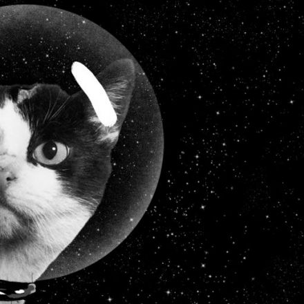 The Secret History of the First Cat in Space