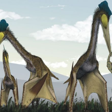 Pterosaurs Aren't Actually Dinosaurs, but They Are Actually Awesome