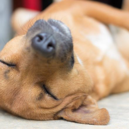 Let Sleeping Dogs Lie: It Helps Them Consolidate Memories