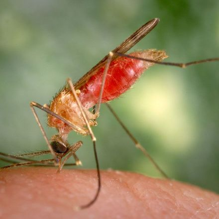 Next-gen insect repellents to combat mosquito-borne diseases
