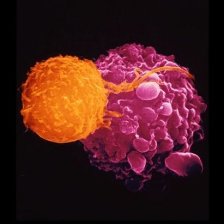 Cancer-fighting viruses win approval
