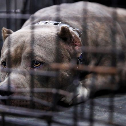 US government to go ahead with fatal experiments on dogs