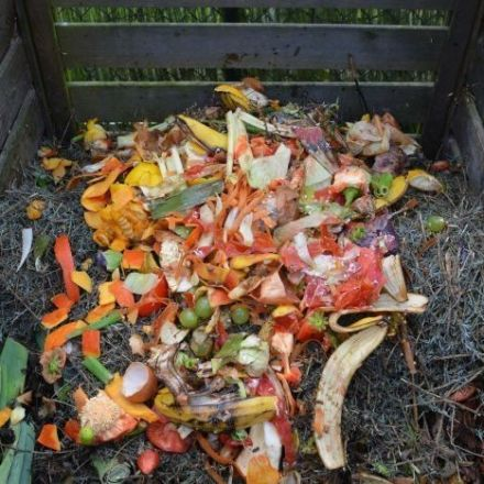 Can the humble compost bucket help us get rid of rubbish bins altogether?