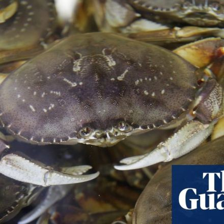 Pacific Ocean's rising acidity causes Dungeness crabs' shells to dissolve