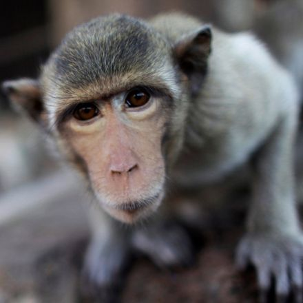 'The stuff of nightmares': US primate research centers investigated for abuses