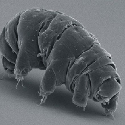 Tardigrades Turn To Glass When Dried Out