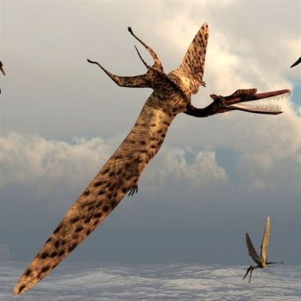 Why Pterosaurs Were the Weirdest Wonders on Wings