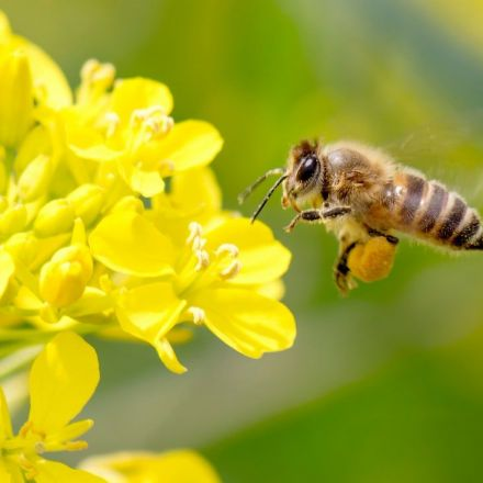 Pesticides damage survival of bee colonies, landmark study shows