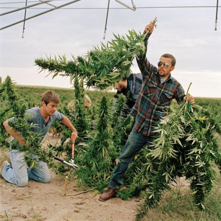 Organic Weed? Marijuana Growers Go Green