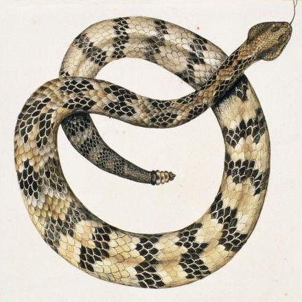 Fear of Rattlesnake Island