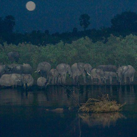 African Wildlife: DarknessFalls