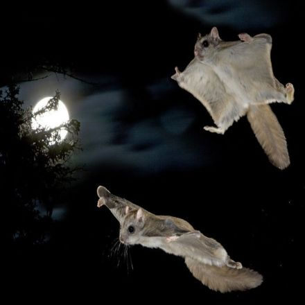See the Nighttime Acrobatics of Montana's Flying Squirrels