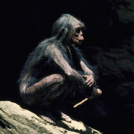 The Stick Is an Unsung Hero of Human Evolution