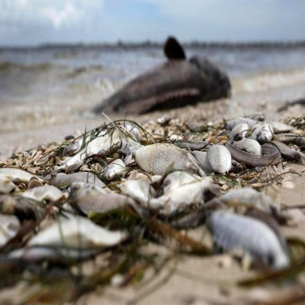 Toxic algae and dead animals: The destruction of Florida's red tide in pictures