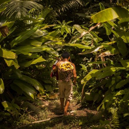The True Tale of an Ayahuasca Quest