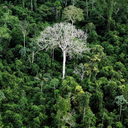 Brazil planning to open up 860,000 acres of the Amazon to logging, mining and farming