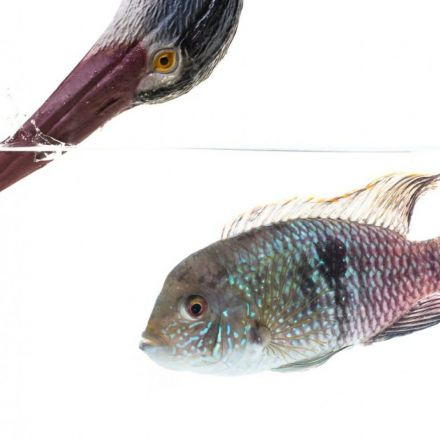 Scientists spent a month terrifying guppies to prove that fish have personalities