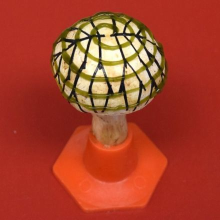 'Bionic mushrooms' that generate electricity created by scientists