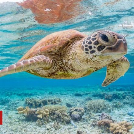 'Single piece of plastic' can kill turtles