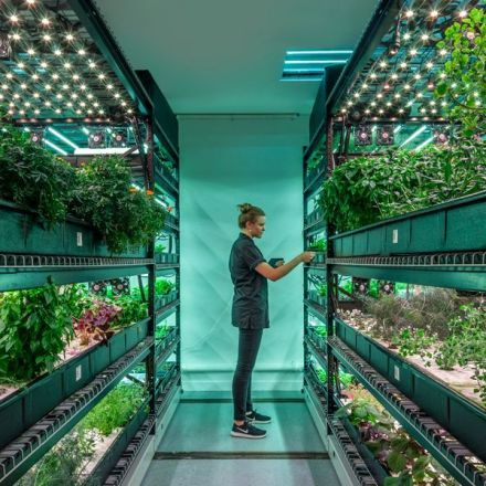 Is Vertical Farming the Future of Your Salad?