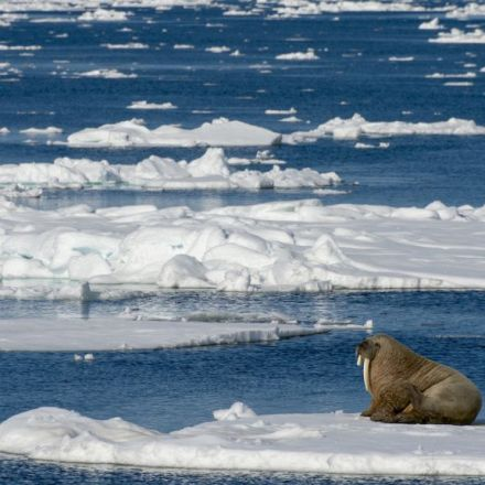 Arctic ice cap destabilizes at 'unprecedented' speed